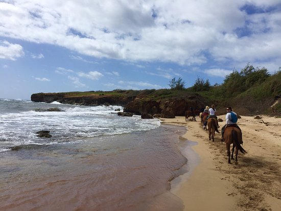 Koloa, Hawaje: Beautiful place to do your horseback riding, gorgeous views.