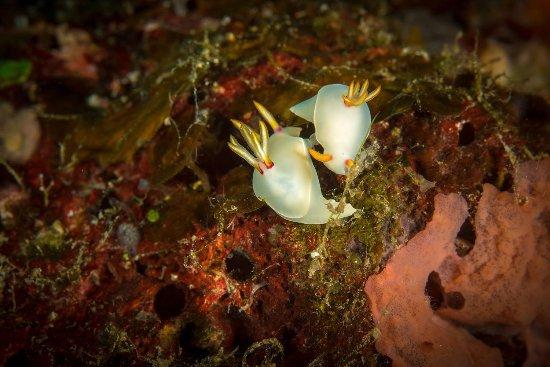 Paradise Taveuni: Macro photography options - nudibranch