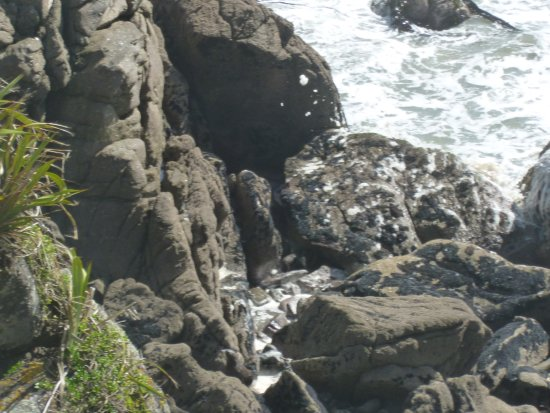 Westport, Nya Zeeland: Seals