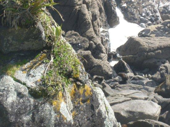 Westport, Selandia Baru: Seals