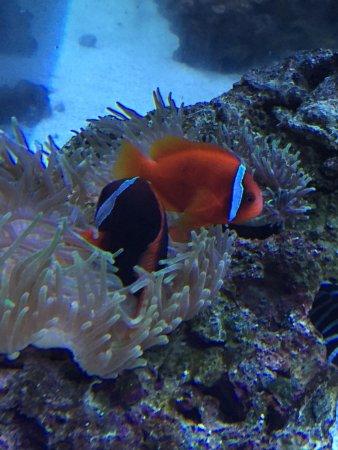 Texas State Aquarium : photo0.jpg