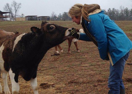 Warm Springs, GA: Saying hello to Matthew the cow
