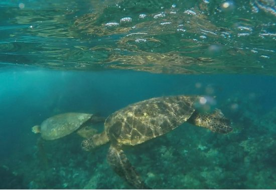 Clear Kayaks Maui : Turtle town
