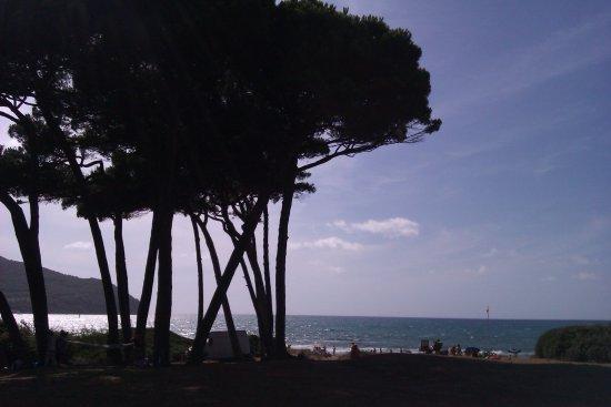 Populonia, อิตาลี: Baratti Gulf and its pine trees