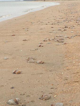 Edisto Beach State Park: photo2.jpg