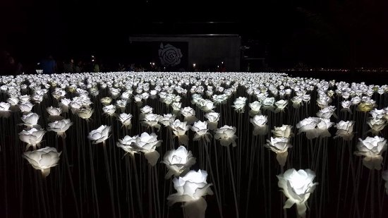 Cordova, Filipinas: The 10,000 roses light up the place when it starts to get dark...