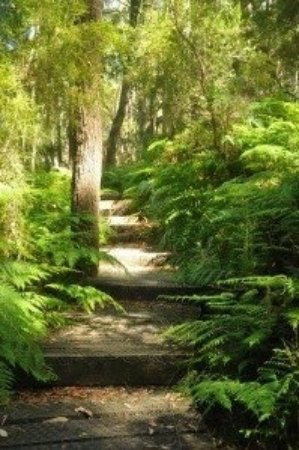 Arthurs Seat, Australia: Kings Waterfall