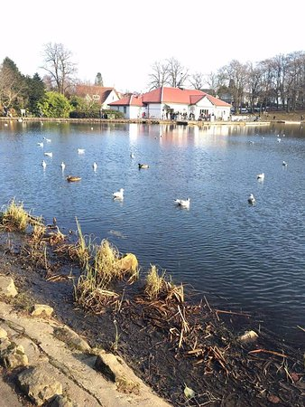 Giffnock, UK: Lovely lake with ducks and ice cream shop in the back