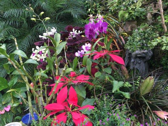 Hunte's Gardens : photo1.jpg