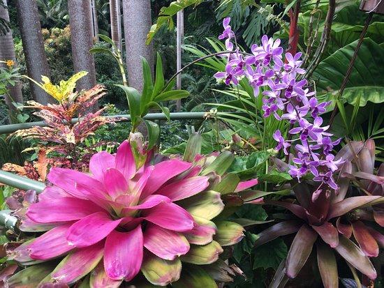 Hunte's Gardens : photo2.jpg