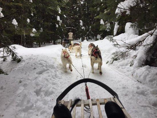 Stoneham-et-Tewkesbury, Canada: Dog-sledding @ Nord Bec