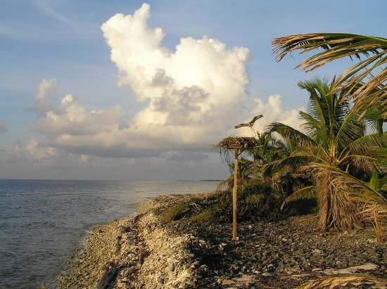 Glovers Reef Atoll, Belice: Resident ospreys that live near the cabanas