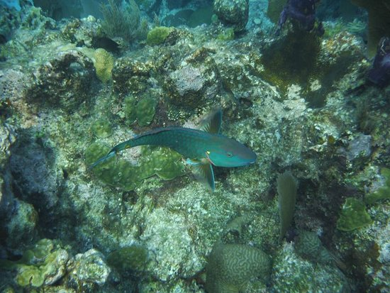 Potret Glovers Reef Atoll