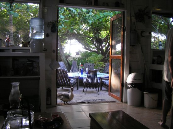 Glovers Reef Atoll, Belice: Kitchen/common area, with resident duck