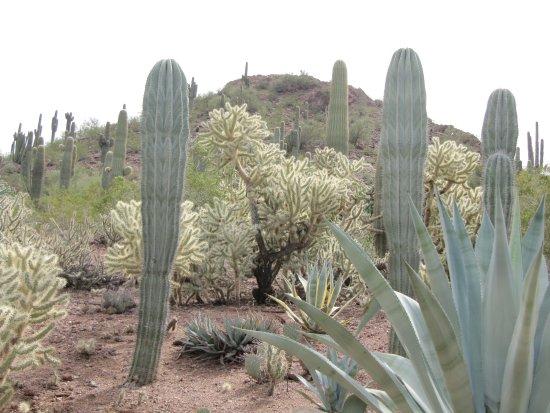 Desert Botanical Garden: One Of Many Type Cacti