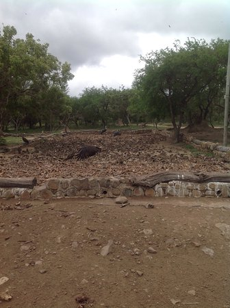 Hoedspruit, Sydafrika: Vulture Restaurant