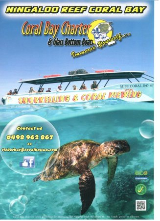 Coral Bay, Australia: Our Glass Bottom Boat tour