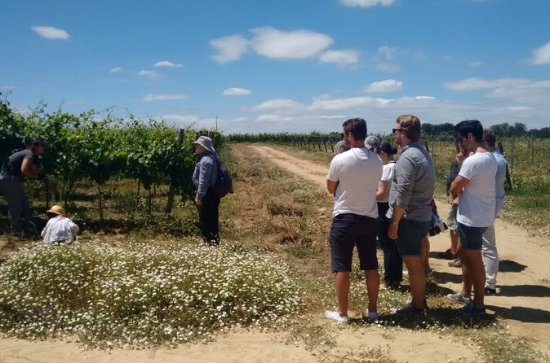Alentejo Wine Tour from Lisbon