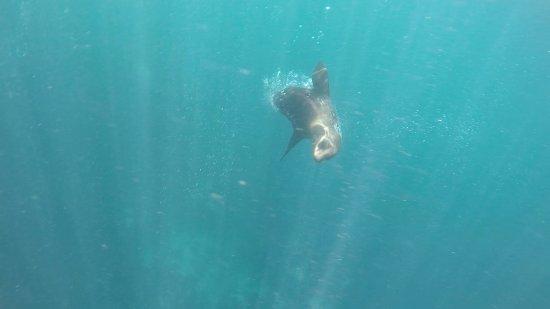 Hout Bay, Sydafrika: Seal