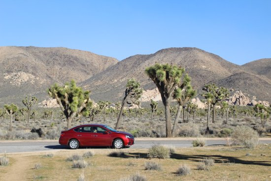 Twentynine Palms, Kaliforniya: Joshua Tree National Park