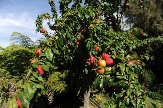 Anakiwa, New Zealand: Fresh fruit in season.