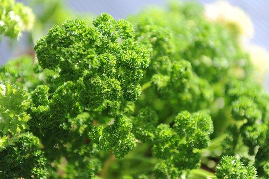Anakiwa, นิวซีแลนด์: Fresh Herbs