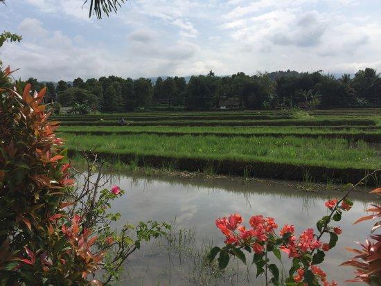 Πεμουτεράν, Ινδονησία: photo1.jpg