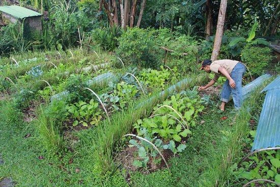 Sarinbuana Eco Lodge: Tending The Organic Gardens
