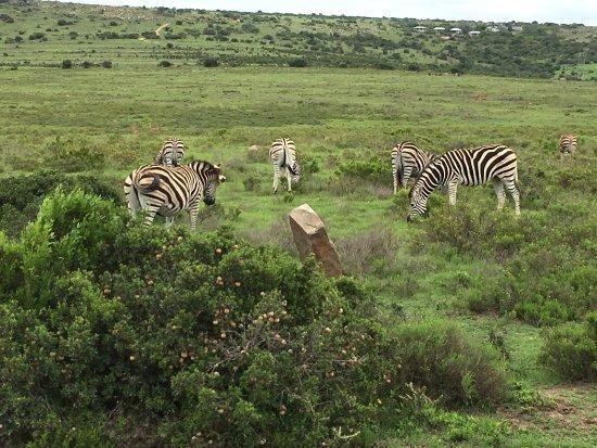 Grahamstown, South Africa: photo3.jpg