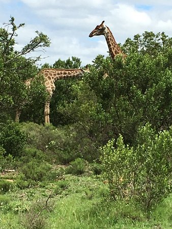 Grahamstown, South Africa: photo4.jpg