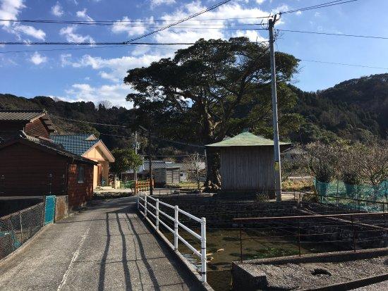 Saiki, Japan: 水が湧いています。 豊かな空気が流れています。