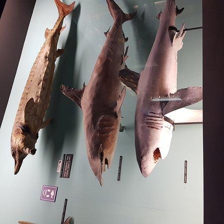 Akwarium Gdynskie MIR