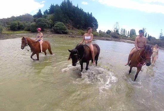 Paihia, Nuova Zelanda: The ponie's gang