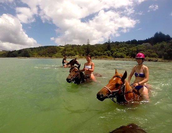 Paihia, Νέα Ζηλανδία: Beautiful turquoise water!