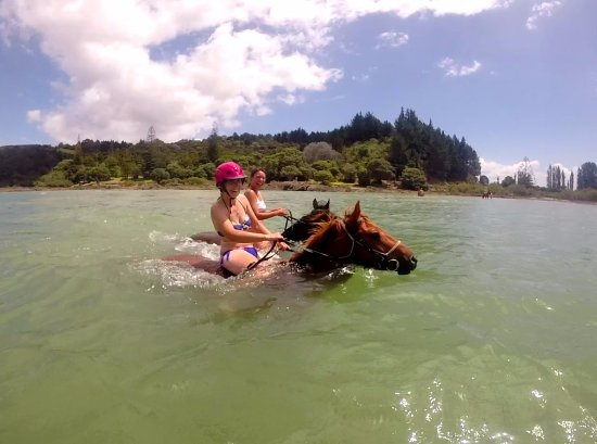 Paihia, Neuseeland: Moh riding Kairo, our little Kaimanawa