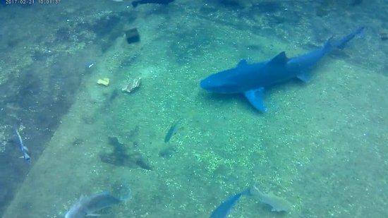 uShaka Marine World: Snorkel Lagoon
