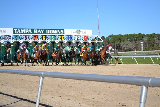 Oldsmar, FL: Tampa Bay Downs is a great way to spend the day in Tampa Bay!