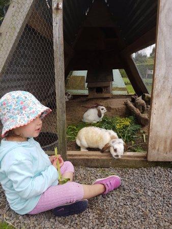 Ngongotaha, New Zealand: Bunny loven is what aMAZEme does best!