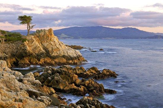 Pebble Beach, CA: The Lone Cypress
