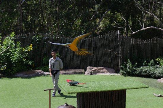 Phu Quoc, Vietnam: flying parrot