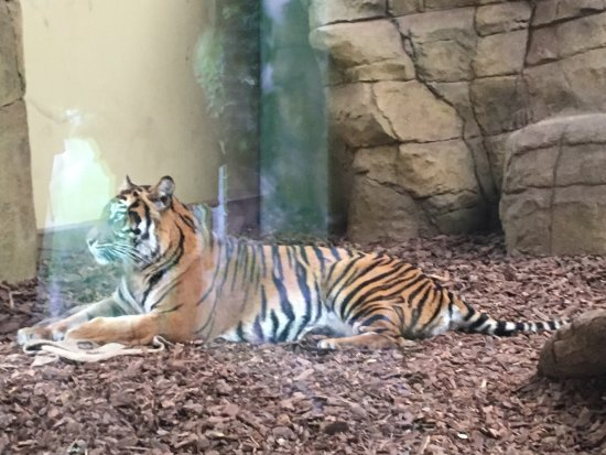 ZSL London Zoo: Photos to show our visually impaired son