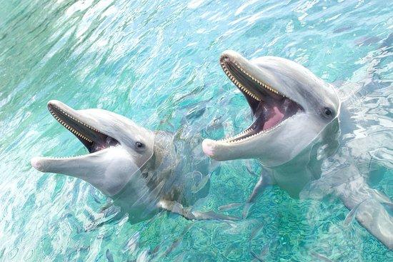 InterContinental Moorea Resort & Spa: Moorea Dolphin Centre