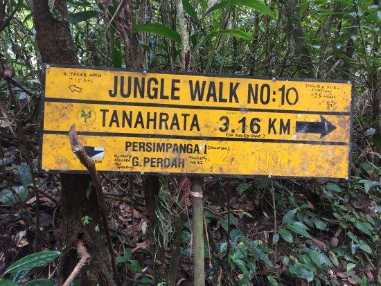 Tanah Rata, Malesia: photo0.jpg