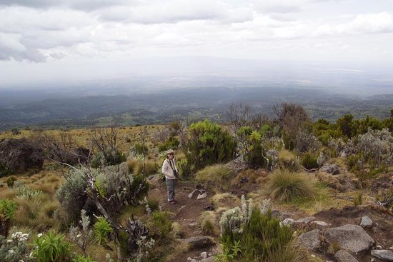 Serena Mountain Lodge: View from Mount Kenya moorlands hike.