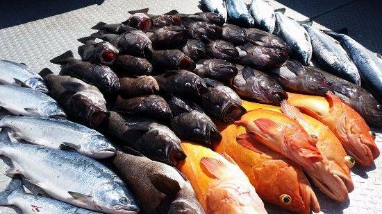 Kenai, AK: Seward Multi-species Trip