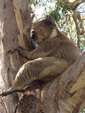 Paynesville, Australia: photo1.jpg