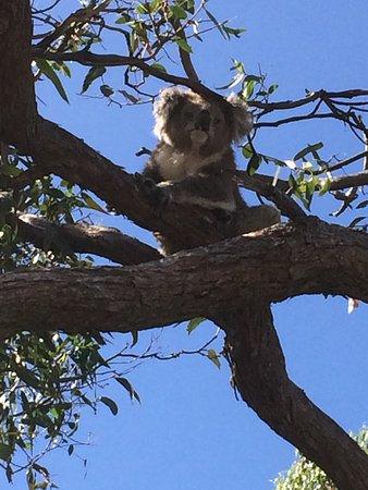 Paynesville, Australia: photo3.jpg
