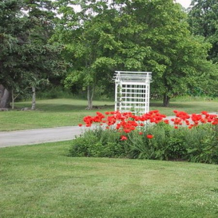 Digby, Canada: Our ornimental poppies in bloom!