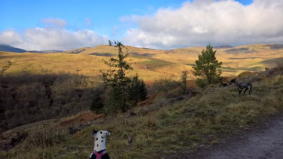 Callander, UK: Dogs enjoying the view.