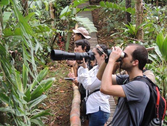 Horquetas, Costa Rica: Garden bird watching